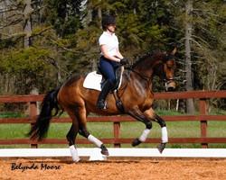 Marianna - 2009 KWPN mare