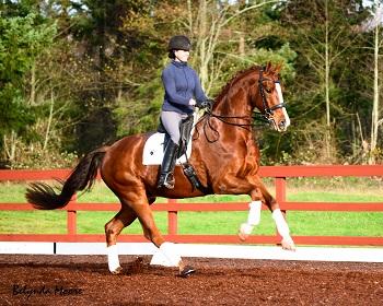 Echalon R - 2009 Grand Prix Gelding