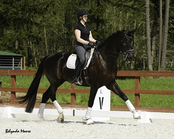 Fourth Level Dressage Horse for Sale