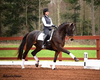 Sugarland - 2008 Rhinelander mare