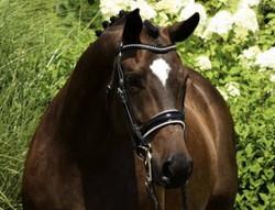 Federweich HW 2008 I-1 mare
