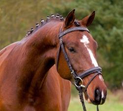 Driant - 2009 2nd gelding