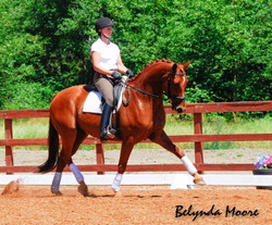 Patriot - 2004 Eventing Gelding