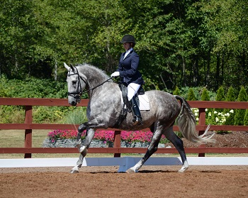 Bandyt - 2006 3rd level Gelding