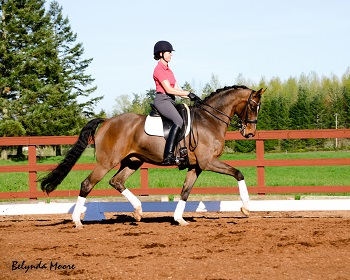 Beau Liberty - 2010 Level 1 Gelding
