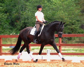 Black Jack - 2008 2nd Level Gelding
