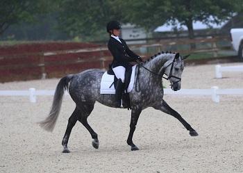 Sinderella - 2006 Holsteiner mare