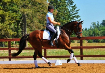 HS Winter Star - 2006 3rd Level Mare