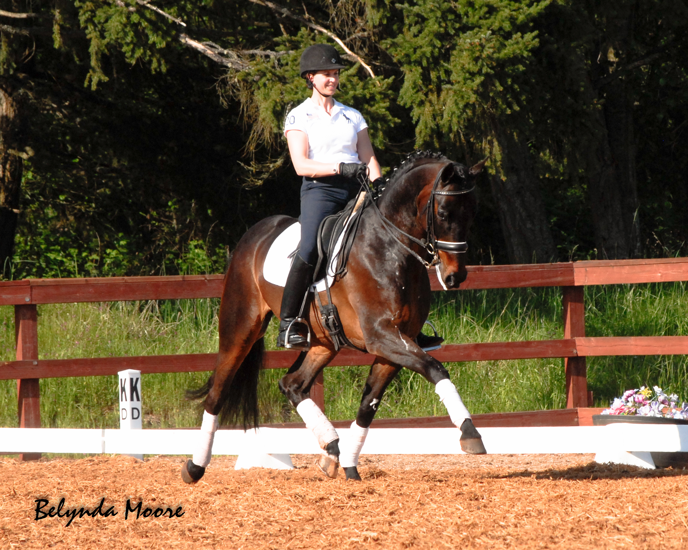Dressage Training Seattle Area
