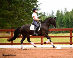 Delano DG - 2008 3rd level Gelding