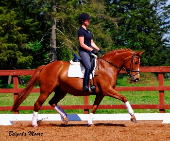 Ginger - 2002 2nd level mare