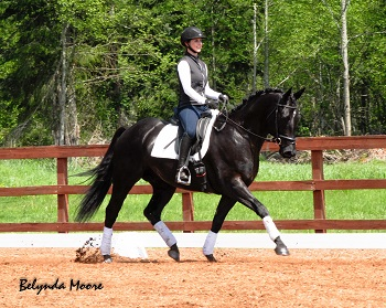 Gorgeous - 2010 Black Gelding