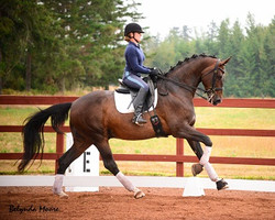 Zinedine - Zeus - 2004 3rd level gelding