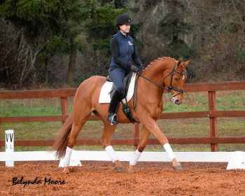 Cambridge - 2006 2nd level gelding