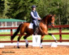 dressage horse sales