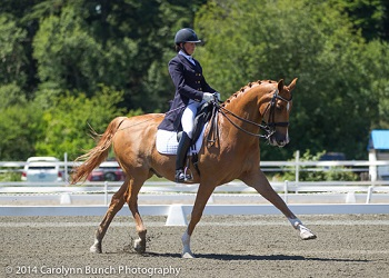Reijne - 1998 Level One Gelding