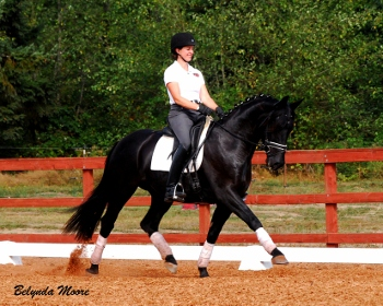 Dark Knight - 2009 Oldenburg Gelding