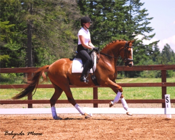 HS Fire and Ice - 2008 Gelding
