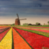 A Tulip Fiel in the Netherlands - By Anna Piecuch