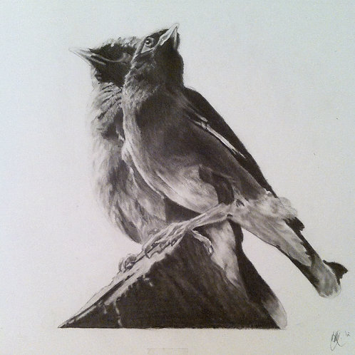 Birds - A3 Giclee Print