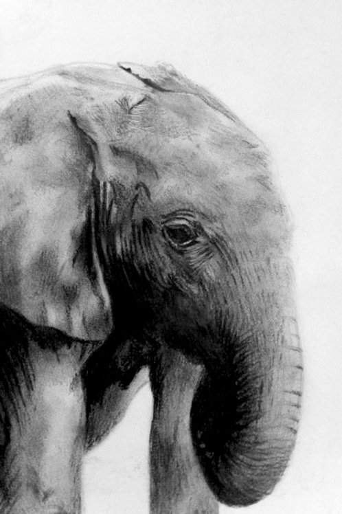 Young Elephant Calf - A5 Giclee Print