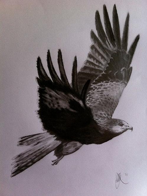 Red Kite - A5 Giclee Print
