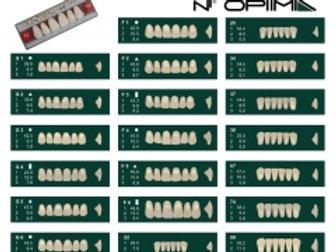 Denti in resina NT OPTIMA col.Vita Posteriori