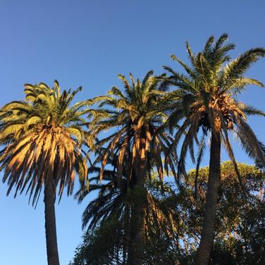 Centennial Park- Sydney, Janvier 2018.