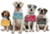 senior-dogs-1024x726 names.png