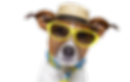 dog-with-goggles-5.png