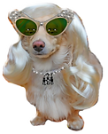 Dressed-Up-Dog-with-Blond-Wig-and-Sungla