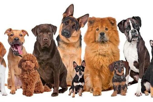Razas-de-perros.jpg