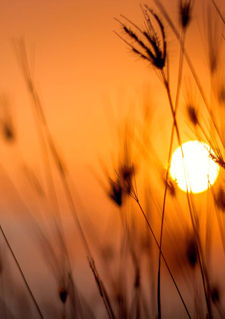 silhouette-photography-of-grass-1454752.