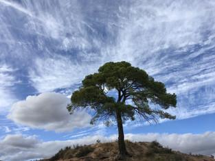 Pomul inversat din mijlocul Raiului