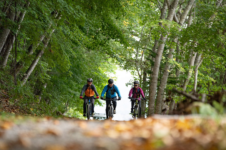 森の中を駈ける自転車