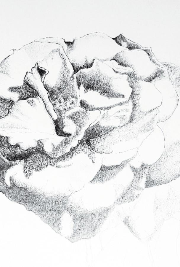 Desenho à lápis
