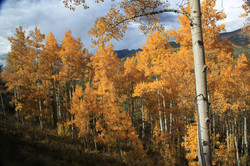 Crested Butte Gold