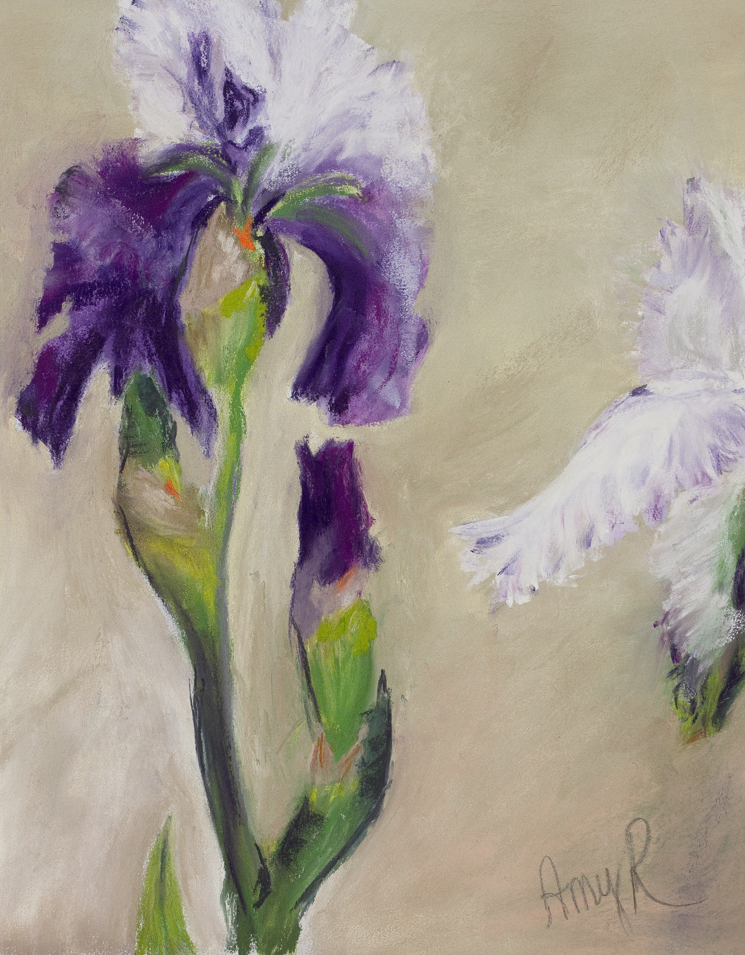 Showy and Shy Purple Irises
