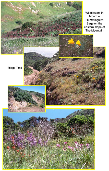 San Bruno Mountain Preservation.png