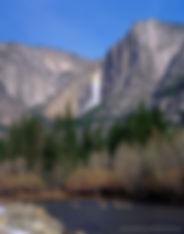 Mule Deer cross the Merced River in California's Yosemite National Park