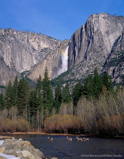 Yosemite Falls, Mule Deer