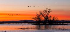 Geese Silhouette, MNWR WEB.jpg