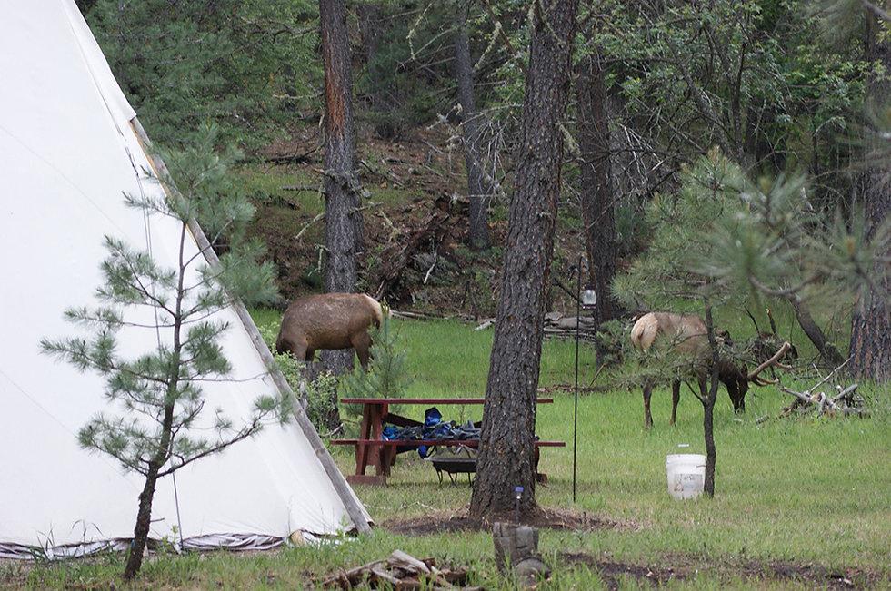airbnb elk.jpg