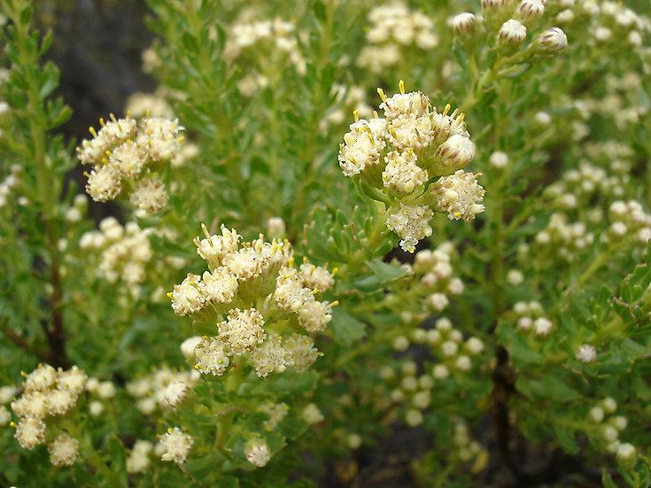 Miel Morena Multiflora Andina de Abejas 100% natural