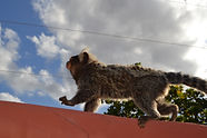 Affenbesuch auf Caju-Verde.JPG