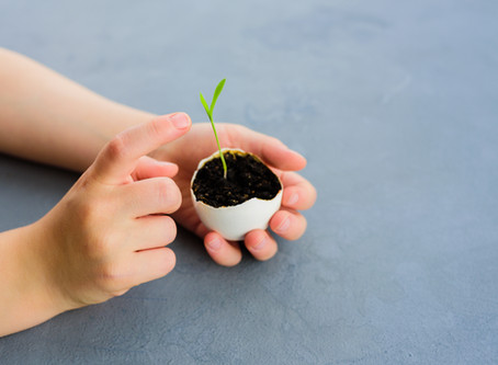 Kids Garden Corner Eggshell Herb Pots