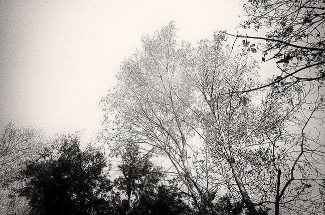 NEGOLE_chapul el bosque_01.jpg