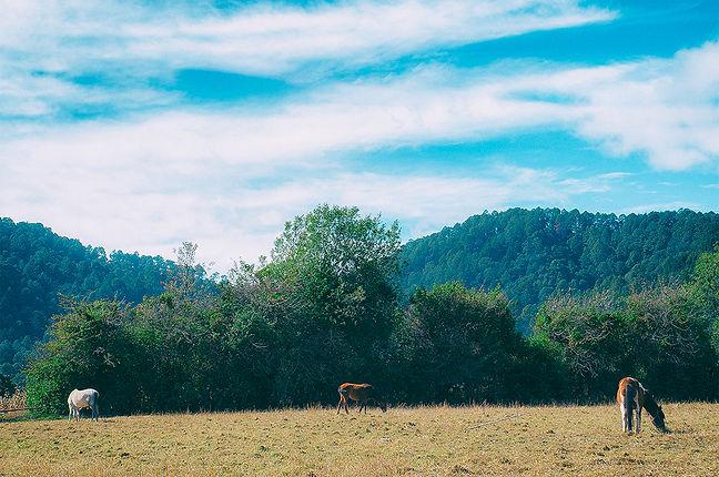 NEGOLE_The blue horses_01-1.jpg