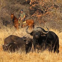 Riding safaris at Ant's (41).jpg