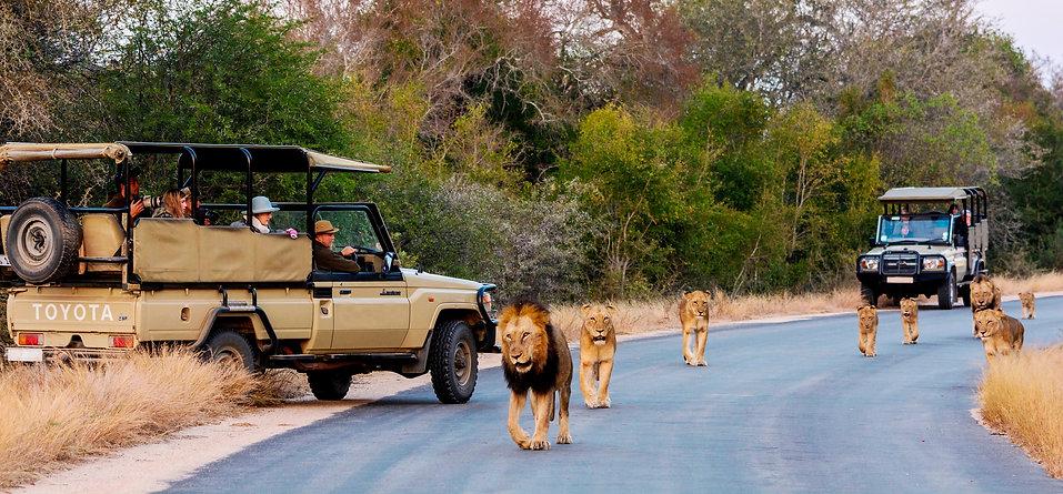 Kruger National Park game drives and safaris